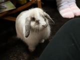 名前を呼ぶとすっ飛んでくるウサギ