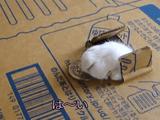 リアル「猫貯金箱」