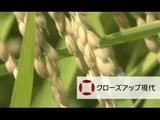 """コメ作り大転換 """"減反廃止""""の波紋/NHK・クローズアップ現代"""
