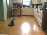 お掃除ロボット「ルンバ」に乗る、サメの着ぐるみを着たネコの動画がカワイイ!公開から3日で125万再生を突破!