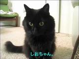 しゃべる猫「しおちゃん」の出欠確認が可愛すぎる件