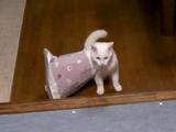 ひぃいいいい! この紙袋ついてくるぅうううう!!遊んでいた紙袋が首に引っかかっただけなのに、パニックになってのた打ち回るネコ