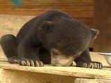 眠すぎて起きていられなかったクマの赤ちゃん