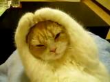 とにかく音を遮断して、寝ることに集中したいネコ