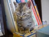 睡魔と戦ってる子猫のかわいさは異常