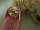 スリッパと戦っていたら顔が抜けなくなって戦闘力がゼロになる猫