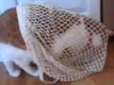ネットに捕まった猫がゆっくり後ずさりして脱出しようとする様子が可笑しすぎる