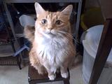 飼い主さんから「笑って~」と言われると、なぜかアクビを連発する猫さん