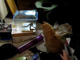 全神経を集中してヘビを観察していた猫に、意地悪でワッ!ってしてみた飼い主さん