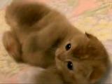 猫好きを秒殺する「たわしねこ」