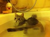 ニャンコと一緒にお風呂に入ってるお姉さんの気分になれるホッコリ映像
