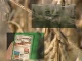 """モンサントの不自然な食べ物/BS世界のドキュメンタリー「アグリビジネスの巨人 """"モンサント""""の世界戦略」"""