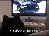 動物系アニメが好きな猫のしおちゃんと、動物系ドキュメンタリーが好きな猫のティーちゃん