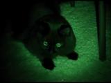 飼い主さんワールド炸裂・第2弾!「伝説の黒おこじょ」という設定で真っ暗な部屋で観察される猫のしおちゃん