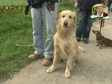 """犬に人権ならぬ""""犬権""""が認められ、殺処分ゼロを誇る 「地球で一番 ペットが幸せな街」 ドイツ・ベルリン"""