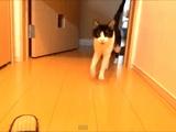 おかえりニャさい!玄関開けたら2秒でにゃんこ♪