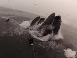 【決定的瞬間】小魚を食べるために急浮上したクジラに食べられそうになるダイバー