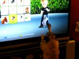 ゲームの犬と遊びたくて仕方がないパグ犬